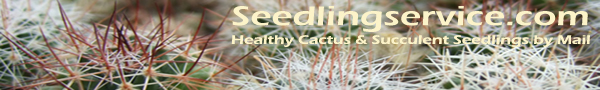 Healthy and naturally cultivated cactus & succulent seedlings by mail