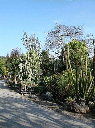 Cactus Mall